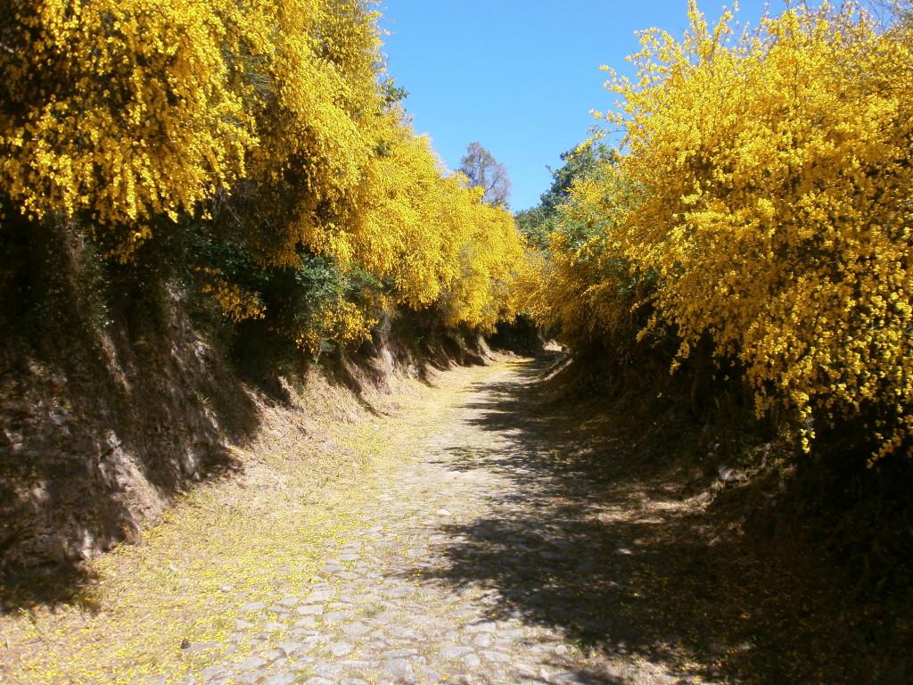 Camino Portuguese.