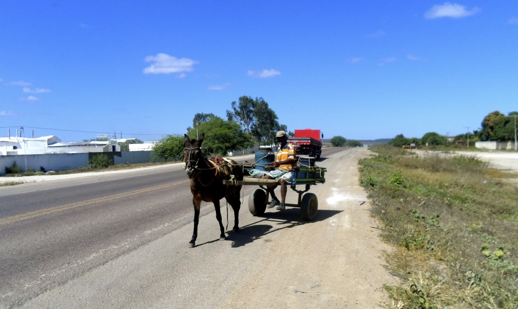 Rush hour in Sertao.
