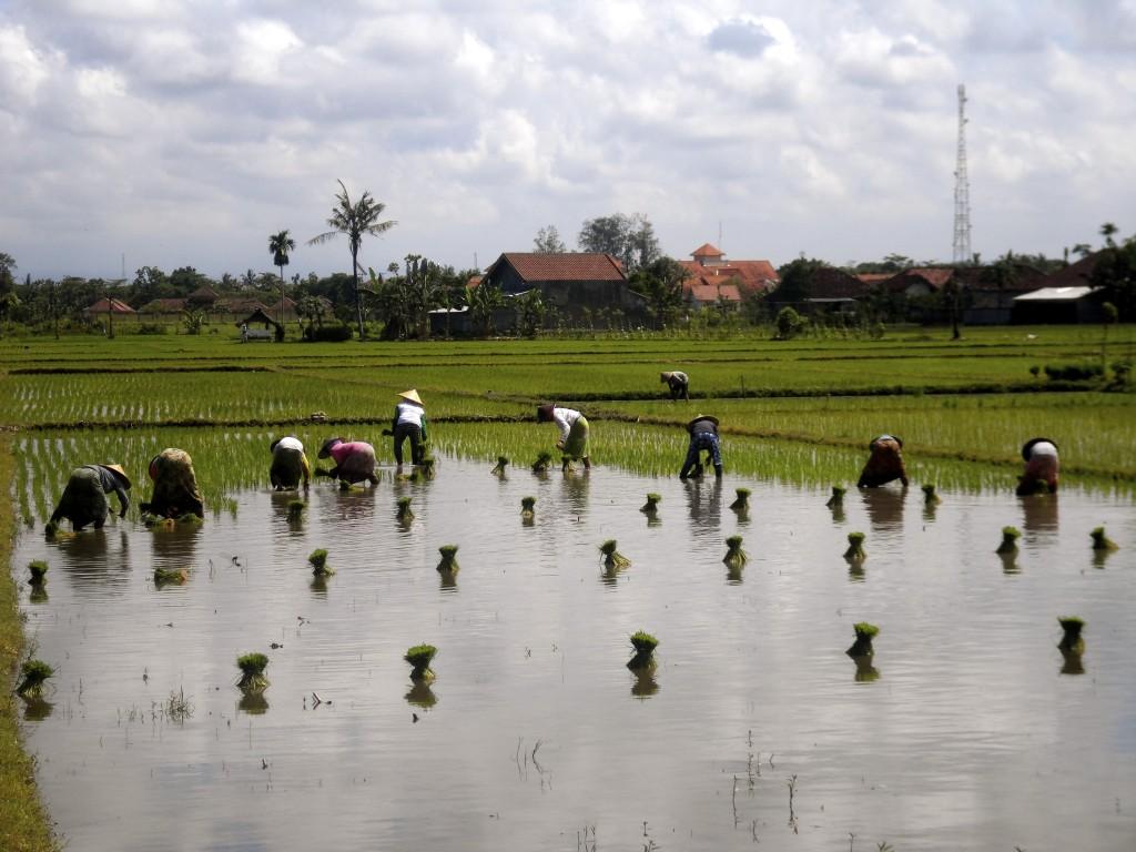 Lombok Scenery.