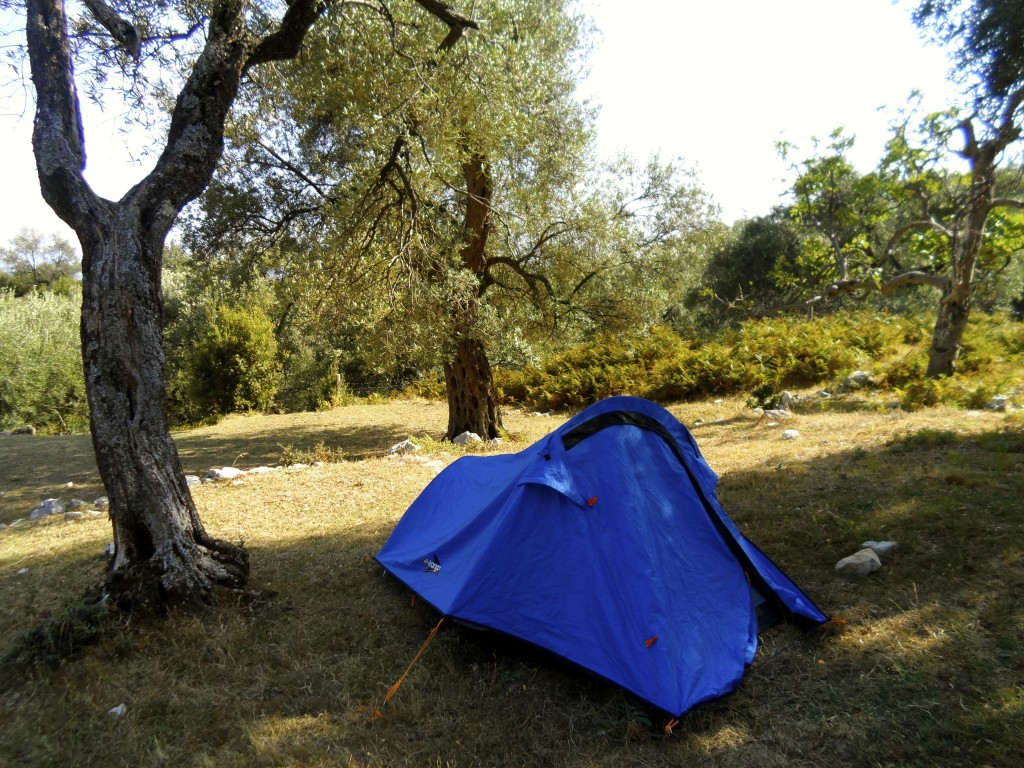 Camping under an olive tree at Shkolla Hostel in Vuno.