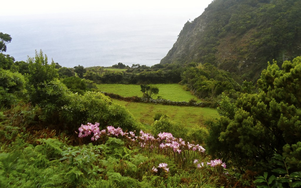 Sao Jorge on the Azores is unique.