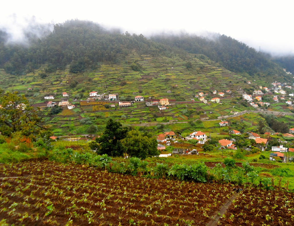 Farming on Madeira Island.