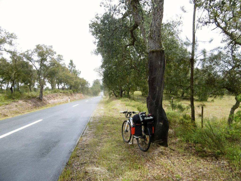 My bicycle leaning up against a cork oak.