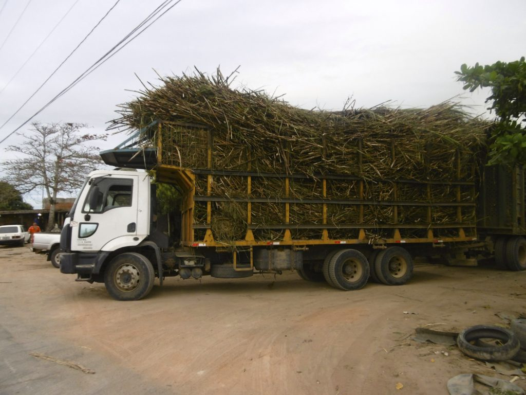 Truck, loaded with sugar cane.
