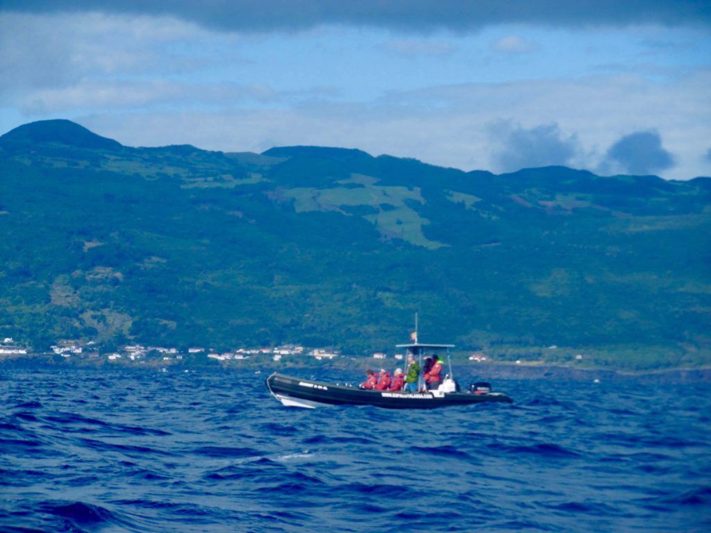 Whale watching on the Azores.
