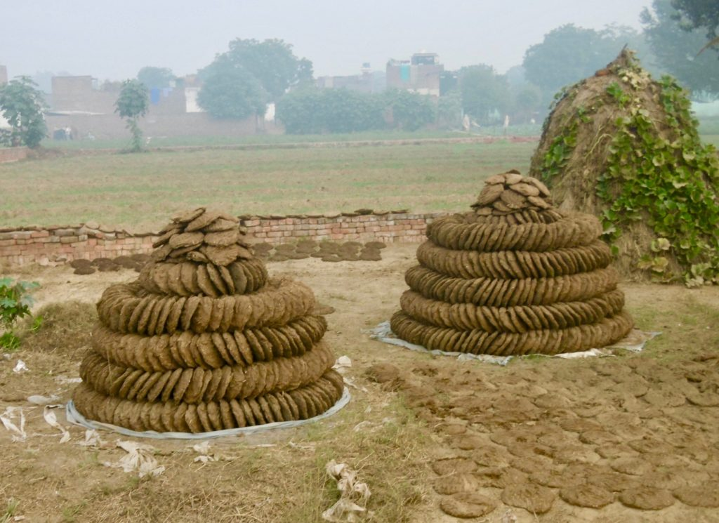 In rural India, many people make a living from collecting cow dung and selling it.