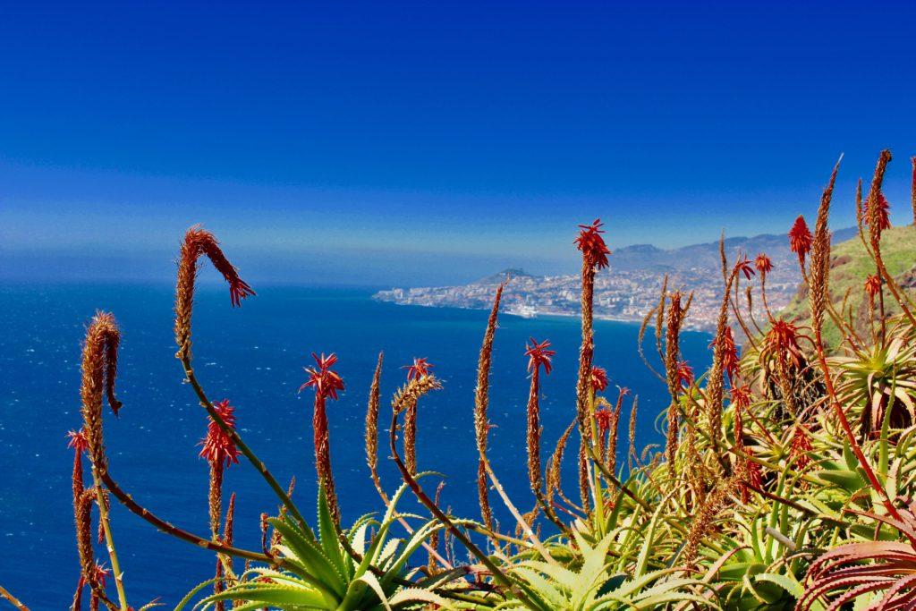 Flower island.