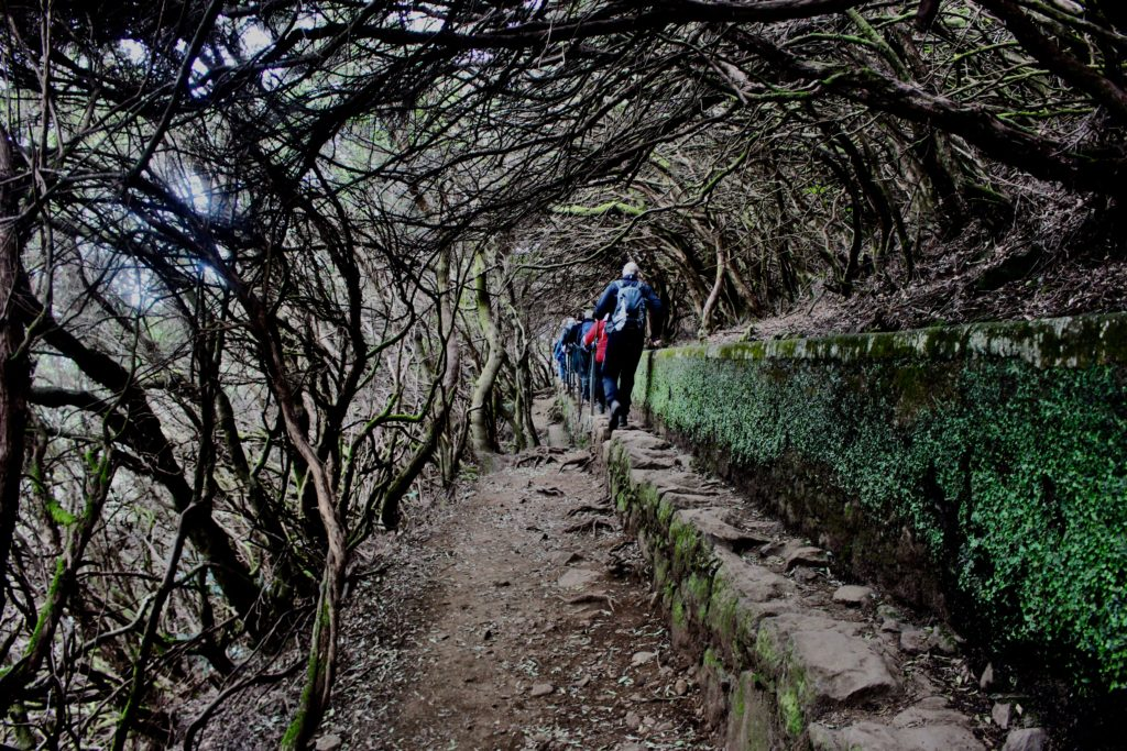 Madeira hiking trail.