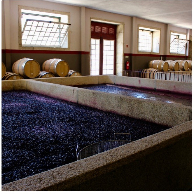 Fermenting grapes.