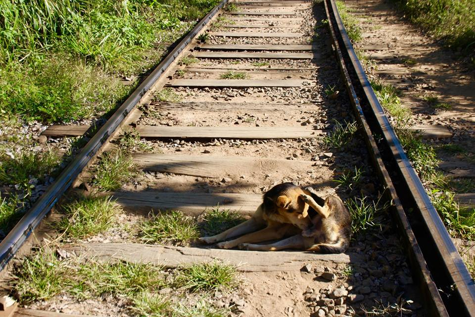 Walking along the rail tracks, where the dogs like to rest.